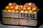 Rio Star are my favorite of the bunch! (Photo courtesy of TexasSweet.com.)