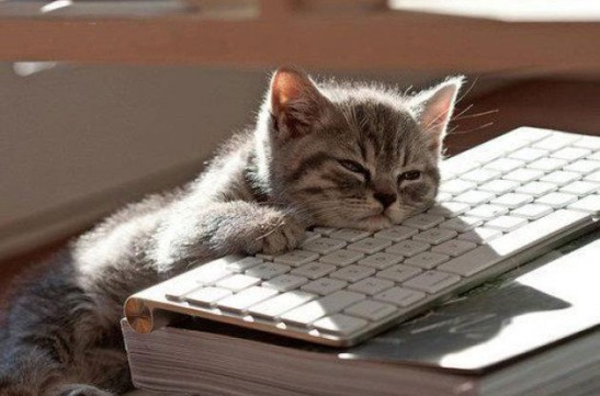 "Did you know that cats asleep on a keyboard are a thing? Google ""asleep on keyboard."" You'll get as many cat images as human ones. (Image courtesy of technobuffalo.com.)"